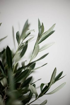 Whats Wallpaper, Plant Wallpaper, Flower Phone Wallpaper, Nature Wallpaper, Wallpaper Backgrounds, Iphone Wallpaper, Aesthetic Backgrounds, Aesthetic Wallpapers, Image Deco