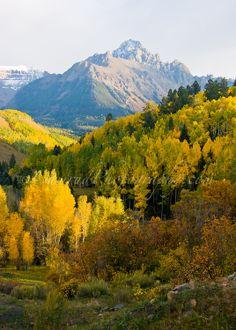 Autumn aspen, Mt. Sneffels Wilderness, Ouray County, Colorado | Jon Camrud