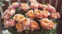 #flowers #wedding #vendastyle #love #vuvuzela #roses