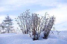 Ännu en bild från gårdagens strapats i närheten av Öna naturreservat. #visitsweden #visitlinkoping #sweden_photolovers #meralink #igdaily #igwinter #weekly_ #ignature #igsweden #ig_sverige #ig_sweden #ig_great_pics #ig_sweden_winter #loves_sweden #ilovesweden #jonas_fotograf #östergötland #hejöstergötland #ic_nature #landskap #landscape #ig_landscape #linkoping #linköping #lkpg #lkpgcity #fotograf