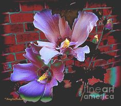 http://fineartamerica.com/images/artworkimages/medium/1/flowers-on-the-wall-marylee-parker.jpg  # flowers #purlp