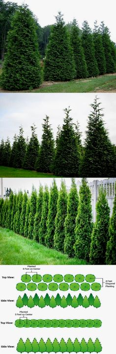 Awesome Fence With Evergreen Plants Landscaping Ideas 39 – Rockindeco - Flower Garden İdeas İn Front Of House Privacy Trees, Privacy Plants, Privacy Landscaping, Front Yard Landscaping, Landscaping Ideas, Privacy Hedge, Landscaping Melbourne, Garden Shrubs, Lawn And Garden