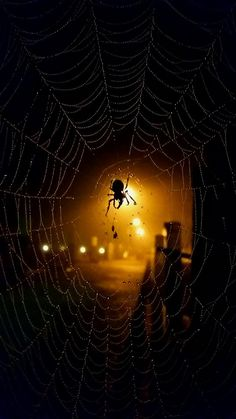Herbst by alcatraz-pardo. Stay in repentance in know. Or unknown sins don't get 🕸🕷webbed up . Spider Art, Spider Webs, Mundo Animal, Macro Photography, Dark Art, Beautiful World, Creepy, Creatures, Deviantart