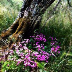Natura in simbiosi. my shot / Certosa di Calci - Pisa - Giugno 2012 #Pisa #igerspisa #igerstoscana #tuscanypeople #Toscana #Tuscany #Italy #Italia #instaitalian #instaitalia #igers #igtoscana #natura #nature #fiori #piante #Calci #Certosa #myshot #certosadicalci