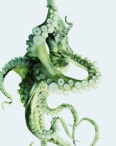 A green octopus