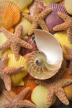 Mother Nature — Beautiful Seashells & Starfish