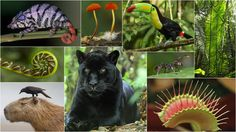 Purchase Licenses - Rainforest Journey - EdTechLens