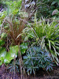 carex 'bronze reflection', 3 pflanzen | colors, Best garten ideen