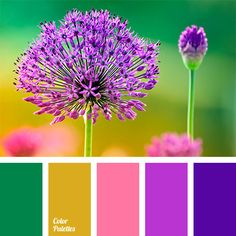 Contrasting Color Palettes | Page 11 of 51 | Color Palette Ideas