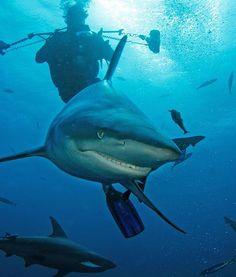 Shark Smiles After Big Meal During Sardine Run - PawNation