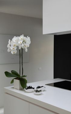 [orginial_title] – Mirka Tuliova Tips for orchid care – How does the orchid last longer indoor plants kitchen orchids groom Phalaenopsis orchid white flower pot Orchid Flower Arrangements, Flower Vases, Flower Pots, House Plants Decor, Plant Decor, Orchid Varieties, Phalaenopsis Orchid, Orchid Care, White Orchids