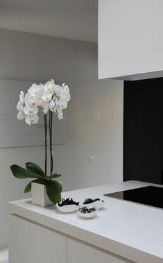 mistletoe cactus syn rhipsalis cassutha mistletoe pinterest mistletoe cacti and. Black Bedroom Furniture Sets. Home Design Ideas