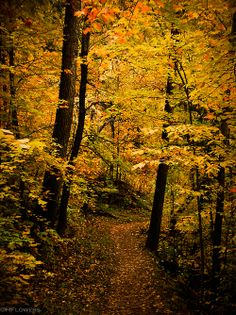 ~~Path to Autumn ~ Chester Park, Duluth, Minnesota by hflowers~~