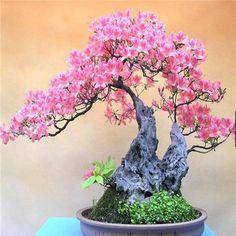 2015 Bonsai azalea Seeds 200pcs 10kinds mix Flower Seeds Novel Plant for Garden Free Shipping-in Bonsai from Home & Garden on Aliexpress.com | Alibaba Group
