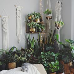 Macramé and plants definitely go hand in hand!