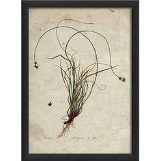 The Artwork Factory Botanical Framed Graphic Art Frame Color: Black