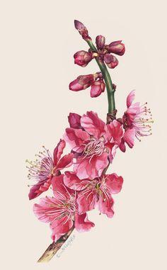 Botanical Portrait II - FLOWER on Behance Eunike Nugroho