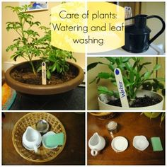Care of Plants: Watering and Leaf Washing at Vibrant Wanderings. There is so much work that can be done with leaves; the web page shows inspiring examples