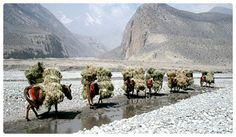 Upper Mustang area Nepal