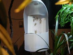 my (experimental) auto feeder for crickets. - Chameleon Forums