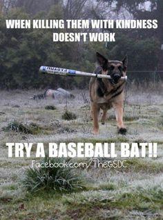 try this #german #shepherd #dog