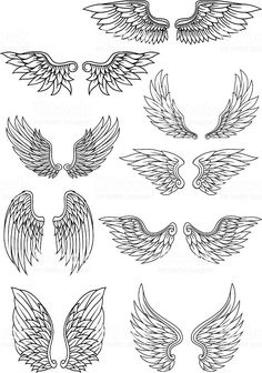 Set of heraldic wings outline in black and white with feather detail for use in heraldry and religion design - Set of heraldic wings outline in black and white with feather detail for use in heraldry and religi - Stencils Tatuagem, Tattoo Stencils, Pencil Art Drawings, Tattoo Drawings, Art Sketches, Funny Drawings, Rosen Tattoo Frau, Wings Sketch, Bird Sketch