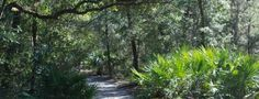 Floridahikes.com ~ a hiking community sharing the love of hiking in Florida, from easy walks on boardwalks to backpacking trips on the Florida trail.