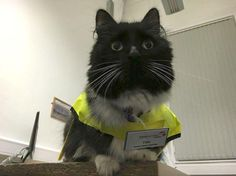 The Huddersfield Station Cat Has Finally Been Promoted | Mental Floss UK