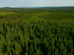 The boreal forest from the government of Canada. Includes information on resources and development.
