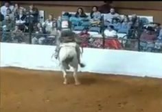 Two horses recently died in the same Texas rodeo. Both bucked head first into a wall, leading to their violent, painful deaths. Urge officials to make sure this never happens again.