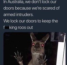 """Top Relatable Memes Australia These """"Top Relatable Memes Australia"""" will make you laugh so hard. So scroll down and keep reading these """"Top Relatable Memes Australia"""". Really Funny, Funny Cute, Haha Funny, Funny Stuff, Funny Things, 9gag Funny, Funny Humor, Random Stuff, Funny Koala"""