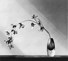 76 STILL LIFE // SHADOWS ideas | still life, robert mapplethorpe, still  life photography