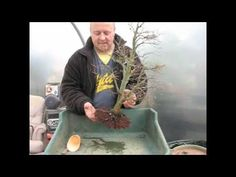 How to Repot Bonsai Trees - The Basics