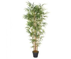 Bloomsbury Market Artificial Bamboo Tree in Pot Size: H x W x D Green Office, Bamboo Tree, Tropical, Potted Trees, Office Decor, Greenery, Decorative Pillows, Canning, Flowers