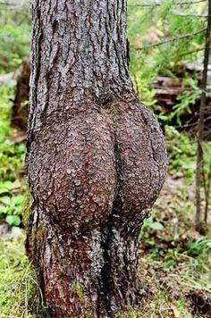 This tree has some junk in the trunk.