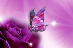 Wallpapers For  Purple Rose Wallpapers