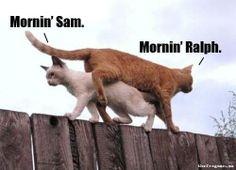 Mornin' Sam. Mornin' Ralph.