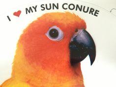84 Best Sun Conure Parrots / Exotic Birds images in 2018 | Exotic