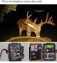 Hunting Stuff, Sony Camera, Home Brewing, Moose Art, Animals, Animales, Animaux, Animal, Home Brewing Beer
