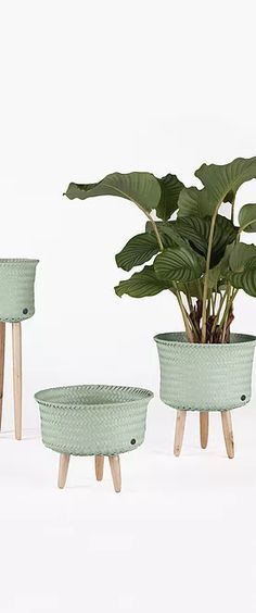Handed By | Baskets Trend