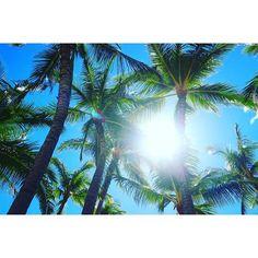 【marimo.0921】さんのInstagramをピンしています。 《AL🌺HA 着いた途端ハプニングで どーなるかおもったけど とりあえず落ち着いた😭💓 まだまだ楽しむぞ🌴🌞🍍 . #hawaii#ハワイ#Waikiki#ワイキキ #genic#genic_mag#genic_hawaii #南国#summer#常夏#海外旅行 #カメラ女子#EOSm10#beach#ビーチ#海 #ヤシの木#🌴#aloha#mahalo》 Hawaii, Instagram Posts, Hawaiian Islands