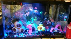 Glofish tank mixture