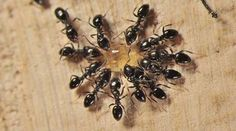 10 Astuces pour lutter contre les Fourmis 1. La craie Les fourmis ne sont pas fans de la craie. Alors n'attendez pas pour faite un barrage à fourmis. Comment ? C'est tout simple. Il vous suffit de faire un trait de craie. C'est certain, les fourmis ne dépassent pas la ligne et vous, vous êtes tranquille. 2. La lavande Les fourmis détestent l'odeur de la lavande. Vous pouvez donc placer des bouquets de lavande vers les portes et les fenêtres. Mais pour avoir un véritable répulsif, il vous…