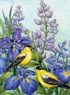 Goldfinch and Irises ~ Elena Vladykina Flower Images, Flower Art, Pictures To Paint, Art Pictures, Floral Watercolor, Watercolor Paintings, Ariana Grande Drawings, Bird Illustration, Illustrations