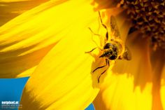 Bee by Reinhard Loher on Antelope Canyon, Bee, Nature, Travel, Animals, Voyage, Animales, Animaux, Bees