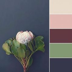 Absolutely love these colors-I like the green with plants 2018 color palettes - millennial pink, mint, navy, magenta, and tan Grey Bedroom Colors, Green Master Bedroom, Bedroom Colour Palette, Pink Palette, Bedroom Colour Schemes Blue, Grey Bedrooms, Master Bathroom, Colour Palette 2018, Color Schemes Colour Palettes