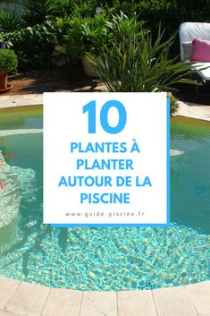 10 plants to plant around your pool