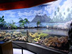 henry doorly zoo coral reef - Google Search