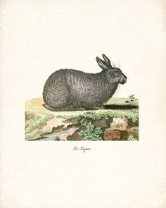 Woodland Rabbit Art Print Le Lapin Print Wall by HighStreetVintage, $15.00