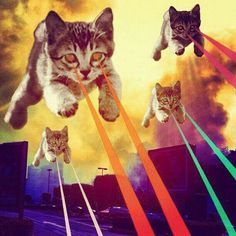 The 4 Horsemen - I love lazer kitties! Crazy Cat Lady, Crazy Cats, Tableau Pop Art, Art Beat, Photos Originales, Galaxy Cat, Jasper Johns, Photocollage, Illustration